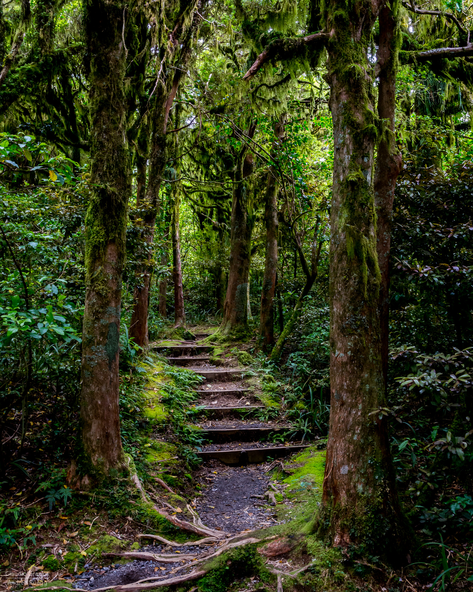 Mystique Forest 3
